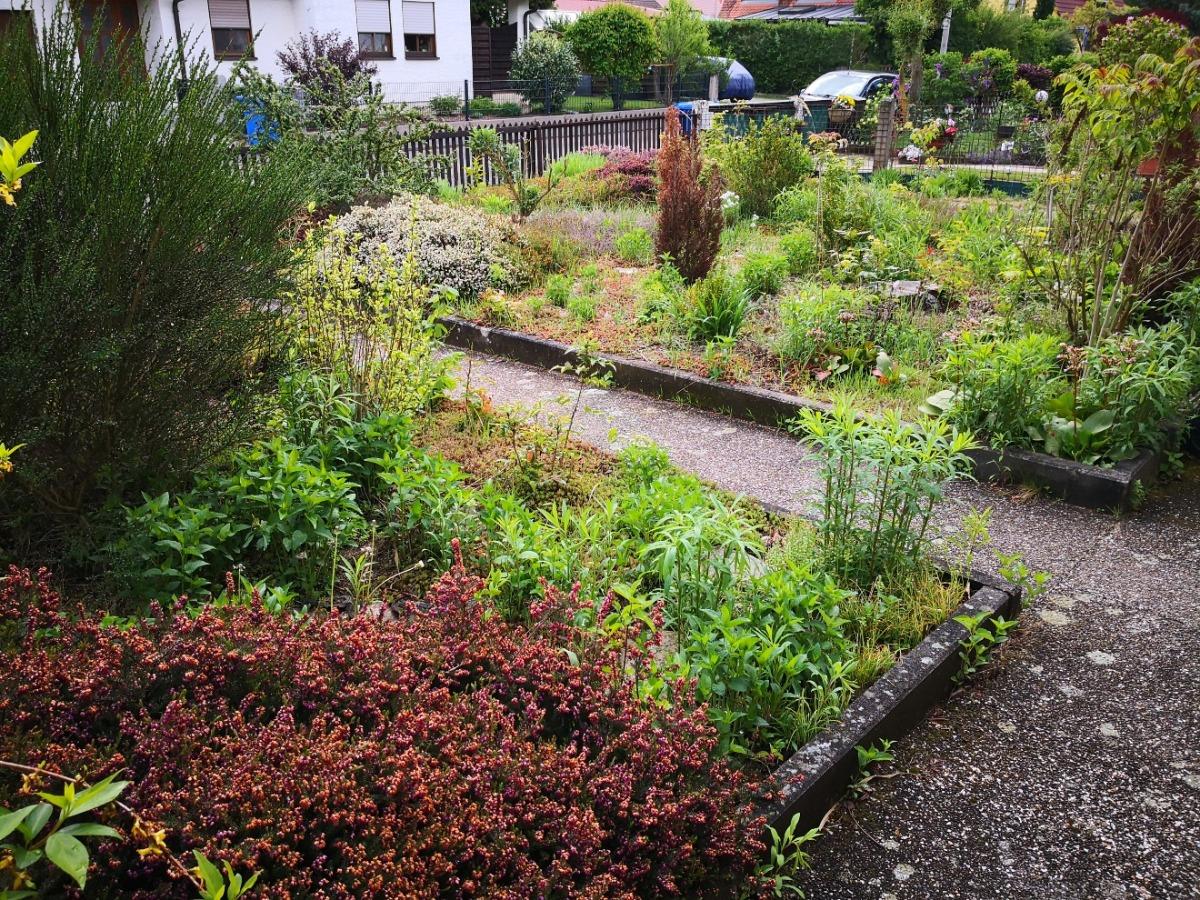 Gartenbereich Straßenseite